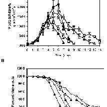Culture behaviour of transfected Sp2 / Q-Ag14 cells. Cells