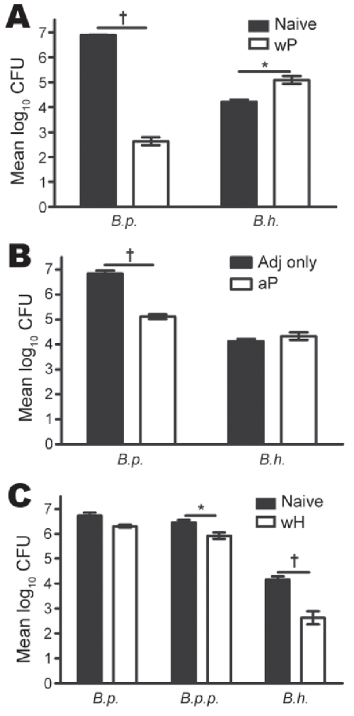 small resolution of results of testing of bordatella pertussis and b holmesii vaccines and protection against b holmesii in mice a mice vaccinated with whole cell pertussis