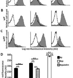 o antigen blocks b pertussis vaccine induced antibodies from mediating download scientific diagram [ 850 x 1225 Pixel ]