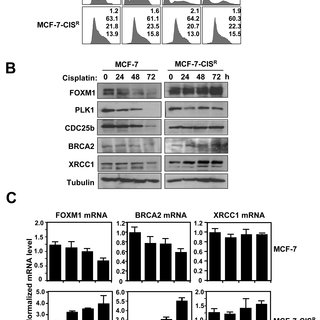 Thiostrepton can overcome cisplatin resistance in MCF-7