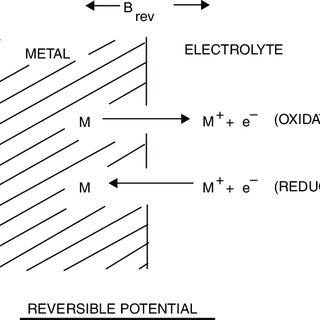 (PDF) Bioelectrodes