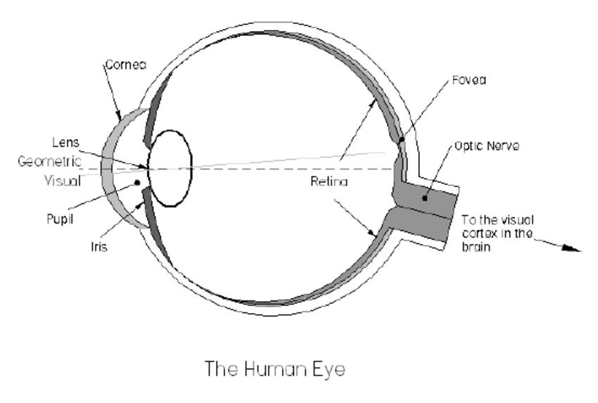 Diagram Schematic Eye