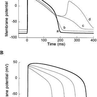 Action potential duration (APD) variability. APD at 90%