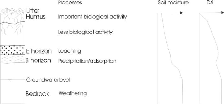 soil profile diagram of michigan suzuki sx4 wiring typical schematics podzol in temperate climate processes and rh researchgate net horizons