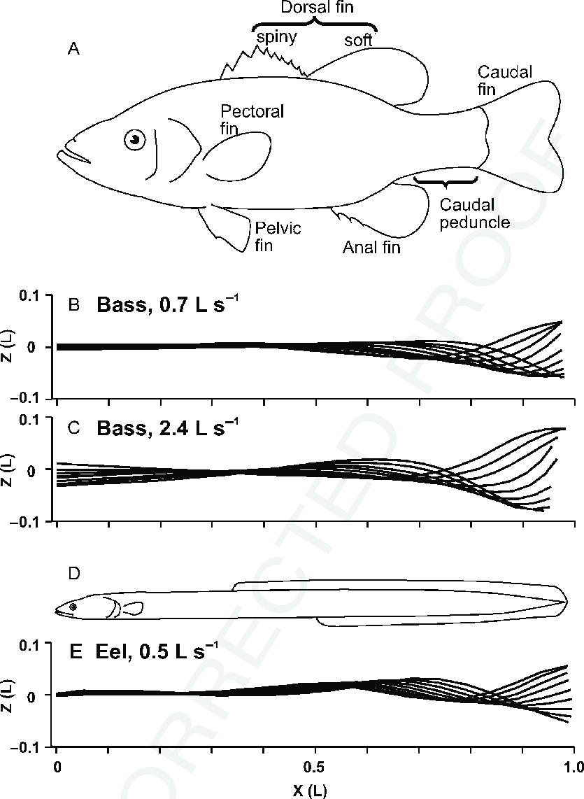 medium resolution of  a outline of a largemouth bass micropterus salmoides to illustrate