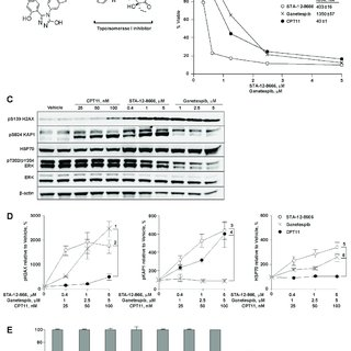 (PDF) Targeted delivery of chemotherapy using HSP90