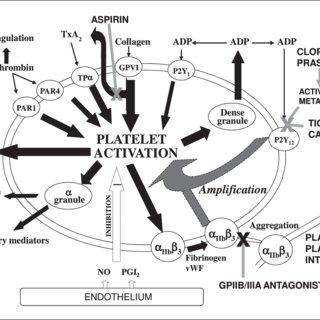 (PDF) Platelet function testing and prediction of