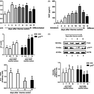 Expression of TrkA mRNA in normal and castrated rats. Real