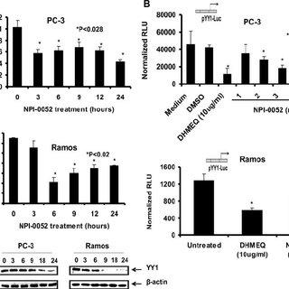 Inhibition of YY1 inhibition by YY1 siRNA sensitizes tumor