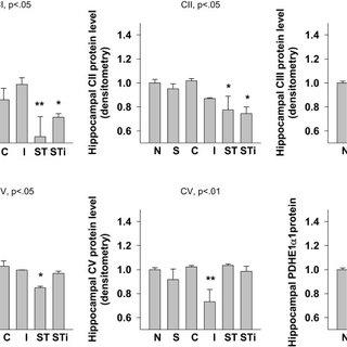 Representative samples of Western blotting of CI, CII