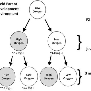 (PDF) Fish embryo and juvenile size under hypoxia in the