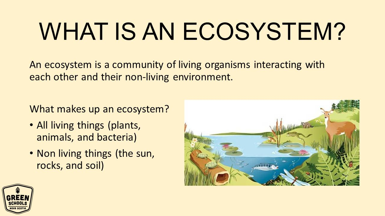 What Is The Ecosystem?