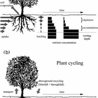 (PDF) The Distribution of Soil Nutrients with Depth