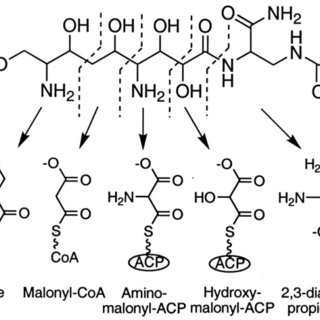 (PDF) Zwittermicin A: A Promising Aminopolyol Antibiotic