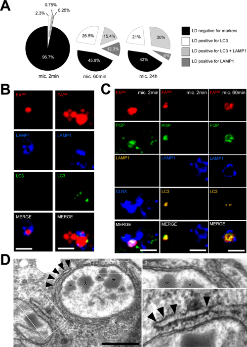 small resolution of kinetics of lipid droplet capture by autophagosome related organelles a pie chart