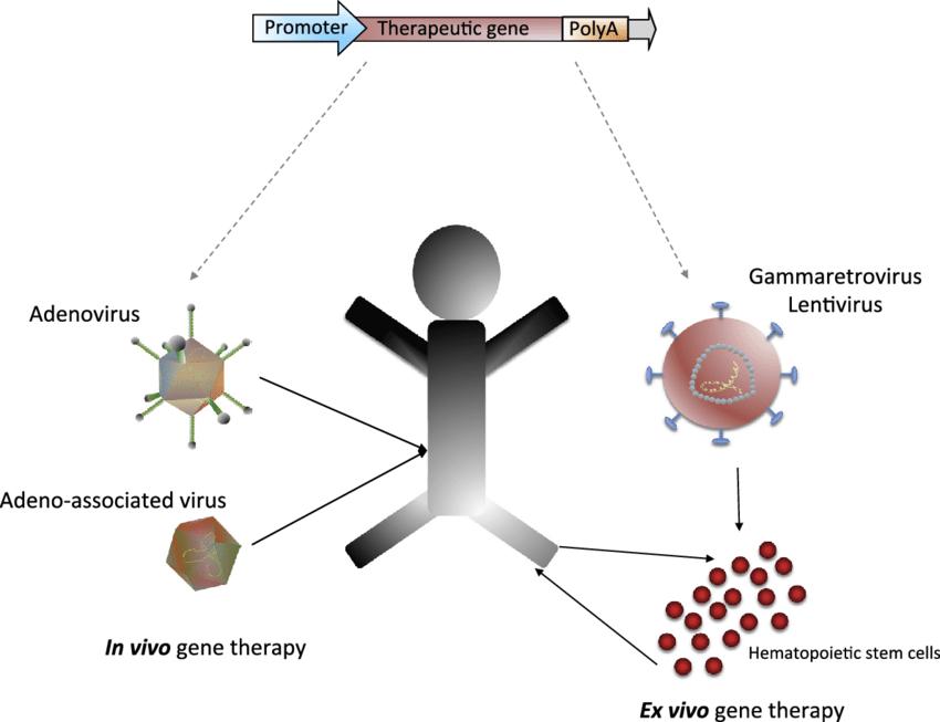 in vivo gene therapy diagram 1979 evinrude 115 wiring 2 ex versus download scientific