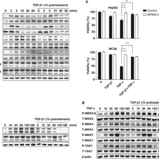 (PDF) TGF-β1 and hypoxia-dependent expression of MKP-1