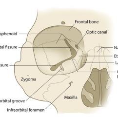 Ethmoid Bone Diagram Mcdonnell Miller Low Water Cutoff Wiring The Orbital Wall Consists Of Frontal Lacrimal Maxilla Download Scientific