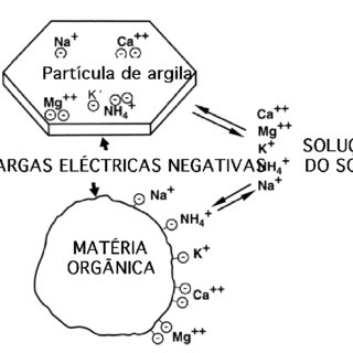 2-Trocas iónicas entre o complexo coloidal e a solução do