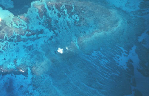 aerial view of coral