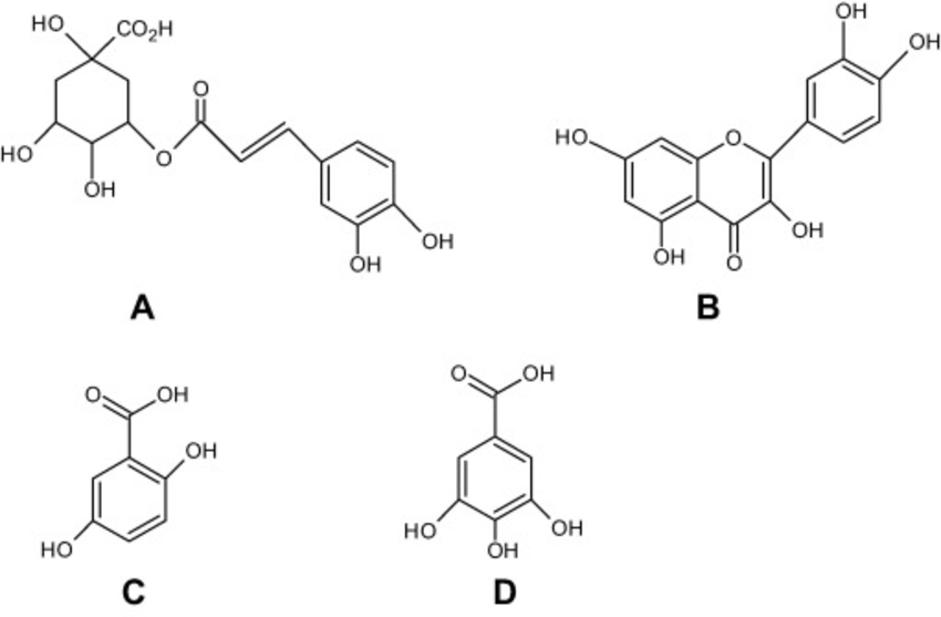 Chemical structures of types of phenols present in A