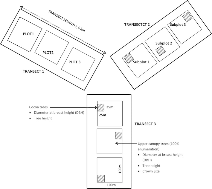 Layout of transects, main plots (100 m × 100 m) and