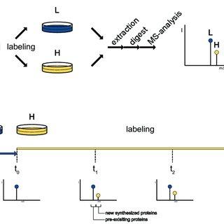 (PDF) Tissue Specific Labeling in Proteomics
