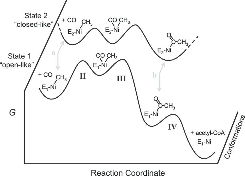 Reaction Coordinate Diagram With Intermediates
