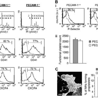 (PDF) A novel role for PECAM-1 in megakaryocytokinesis and
