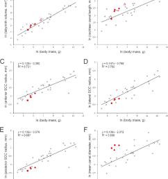 relationships between inner ear measurements and body mass download scientific diagram [ 850 x 1021 Pixel ]