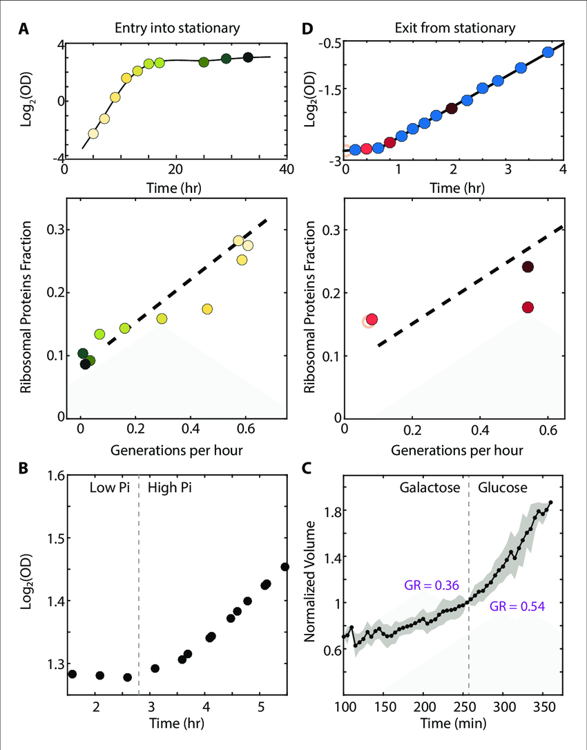 medium resolution of the scaling between ribosome content and growth rate changes when download scientific diagram