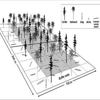 Illustration of silviculture prescriptions for the Dryden