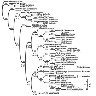 (PDF) Are Mitochondrial Genes Useful for the Analysis of