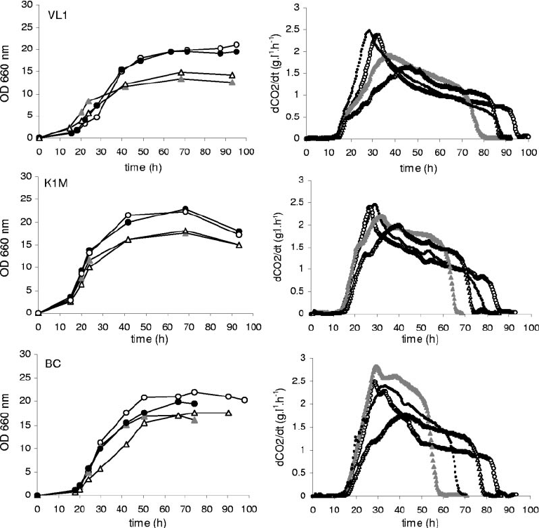 Growth and fermentation rate of the wine yeast strains VL1