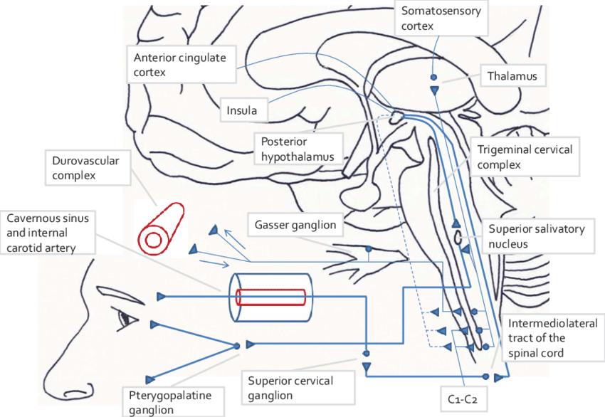 diagram summarising the pathophysiology