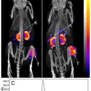 Wholebody SPECTCT images of B16F1 flank melanoma