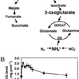 Outline of nitrogen and carbon metabolism in cyanobacteria