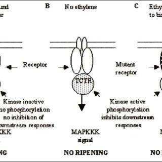 Cycle de Yang de production de l'éthylène. SAM