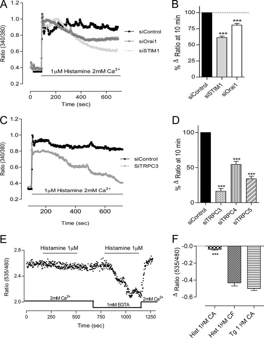 hight resolution of histamine induced ca 2 entry on ea hy926 cells grown on glass cytosolic