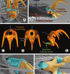 spider foot configuration example 1 simple without foot suture a g [ 850 x 1017 Pixel ]