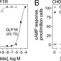 Endogenous Agonist Activity of the GLP1 Receptor Peptide