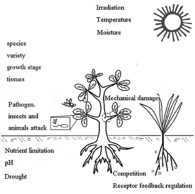 Induction of allelochemical production by the plant itself