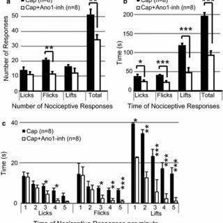 4. A descending pathway regulates nociceptive relay