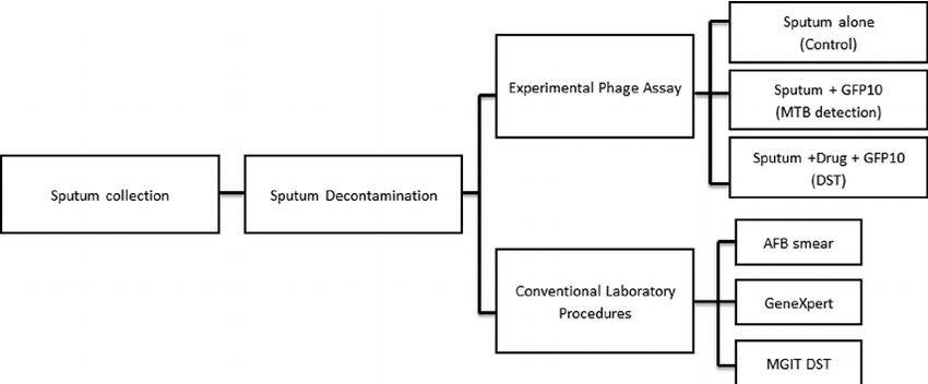 Schematic representation of study procedures. After sputum