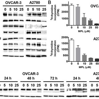 MPL effects on the colony formation activity of ovarian