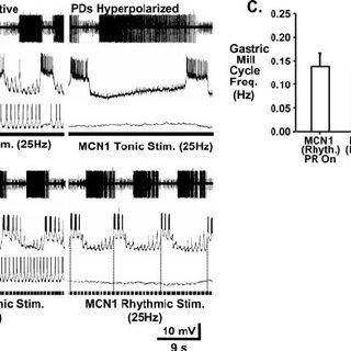(PDF) Intercircuit Control via Rhythmic Regulation of