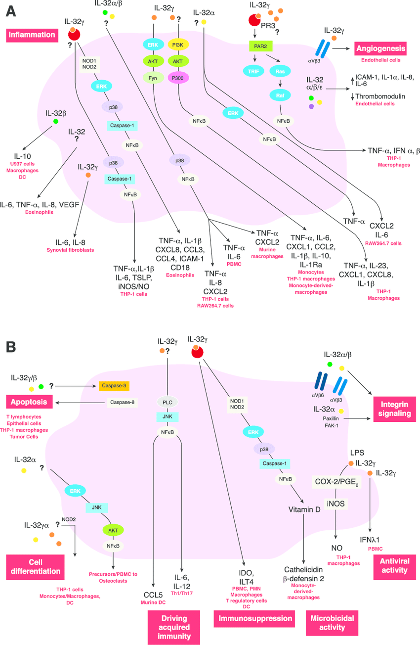 medium resolution of il 32 induced signaling pathways in inflammation a during inflammation