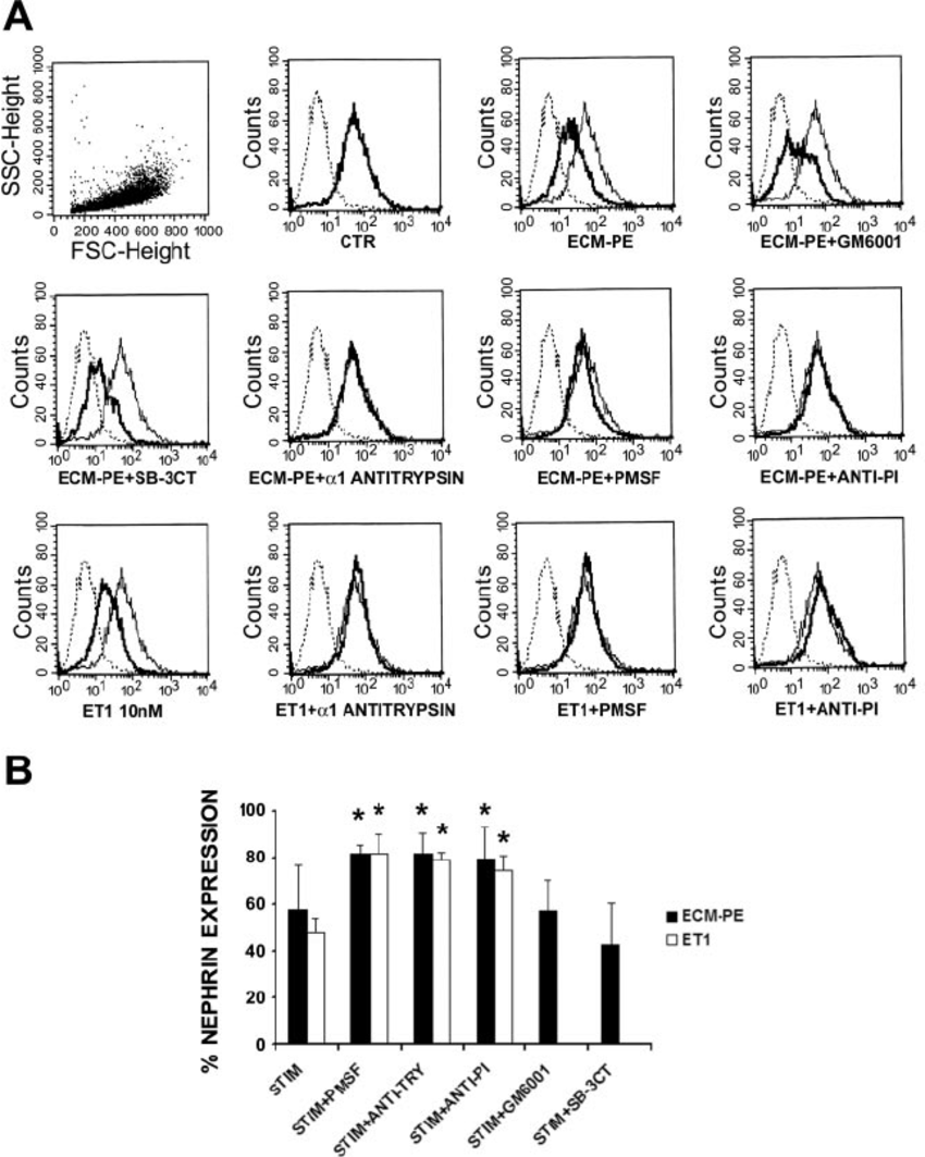 Serine protease inhibitors block nephrin reduction induced