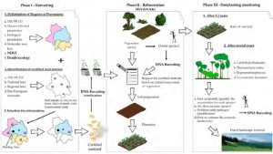 Theoretical example of reforestation process implemented