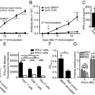 (PDF) In Vivo Visualization of Tumor Antigen-containing